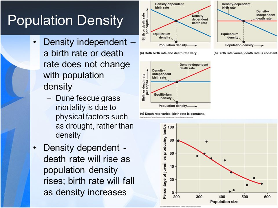Population Density Density independent – a birth rate or death rate does not change with population density.