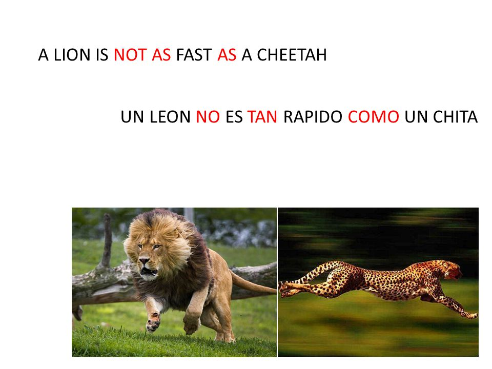 A LION IS NOT AS FAST AS A CHEETAH