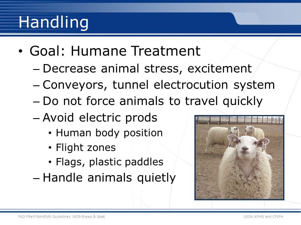 Handling Goal: Humane Treatment Decrease animal stress, excitement