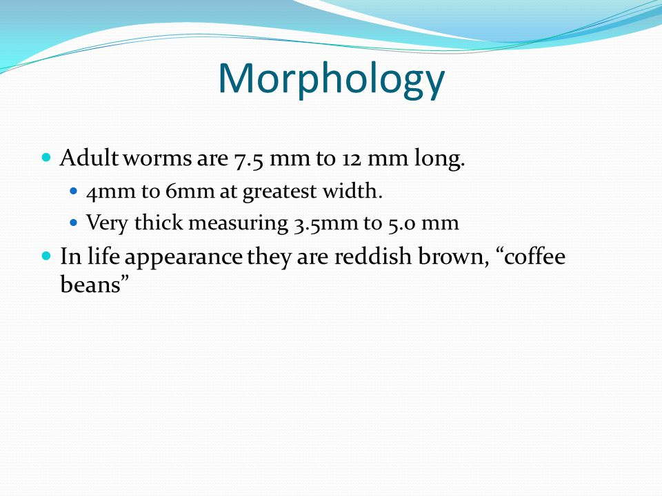 Morphology Adult worms are 7.5 mm to 12 mm long.