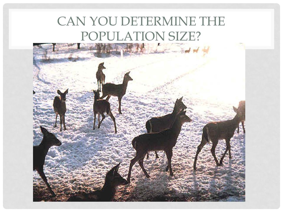 Can you determine the population size