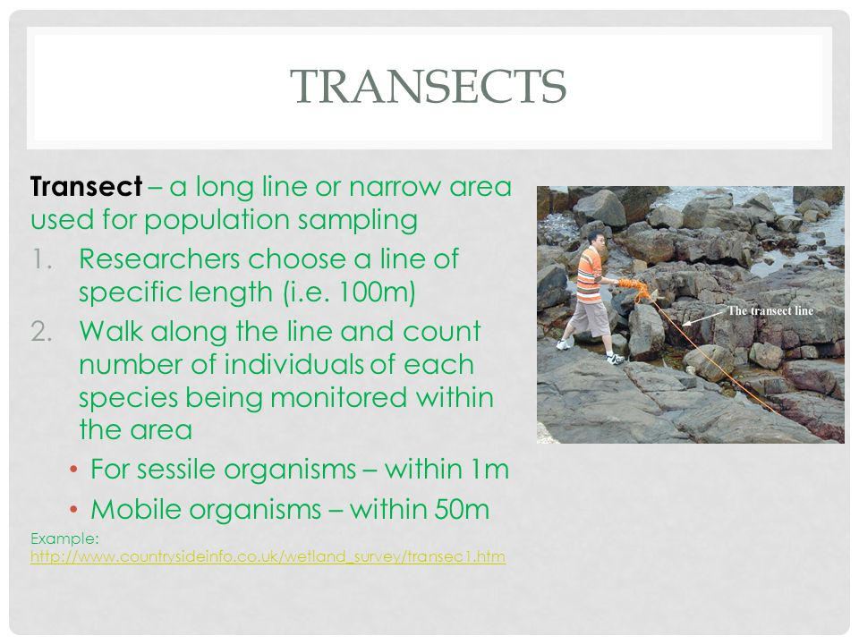 Transects Transect – a long line or narrow area used for population sampling. Researchers choose a line of specific length (i.e. 100m)