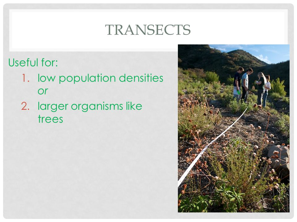 Transects Useful for: low population densities or