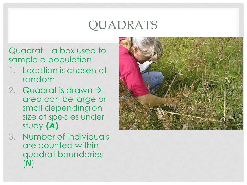 Quadrats Quadrat – a box used to sample a population