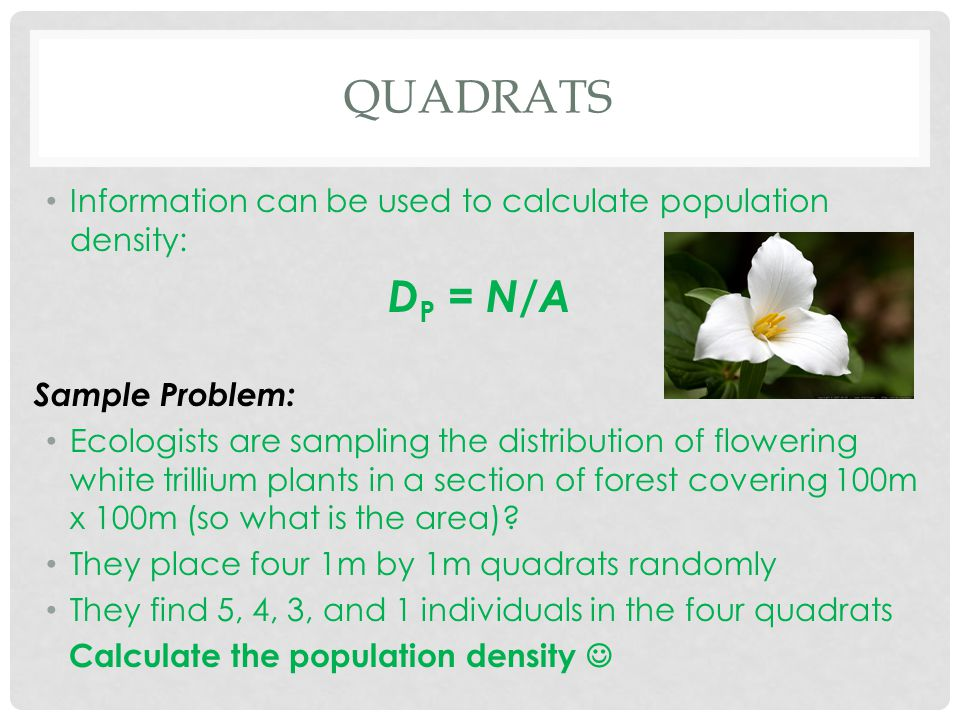 Quadrats Information can be used to calculate population density: DP = N/A. Sample Problem: