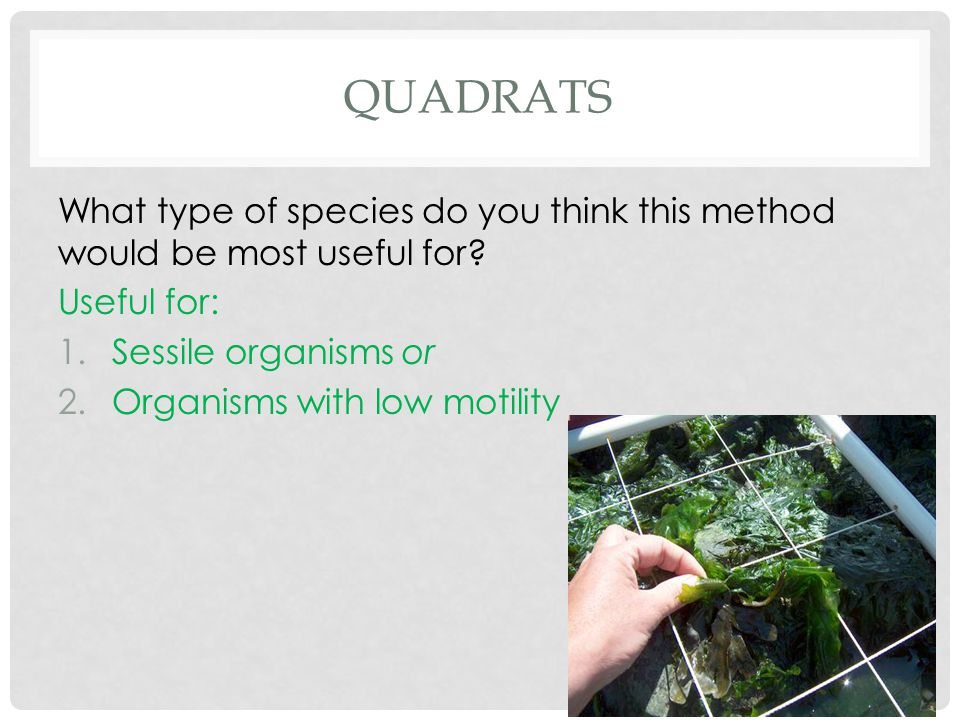 Quadrats What type of species do you think this method would be most useful for Useful for: Sessile organisms or.