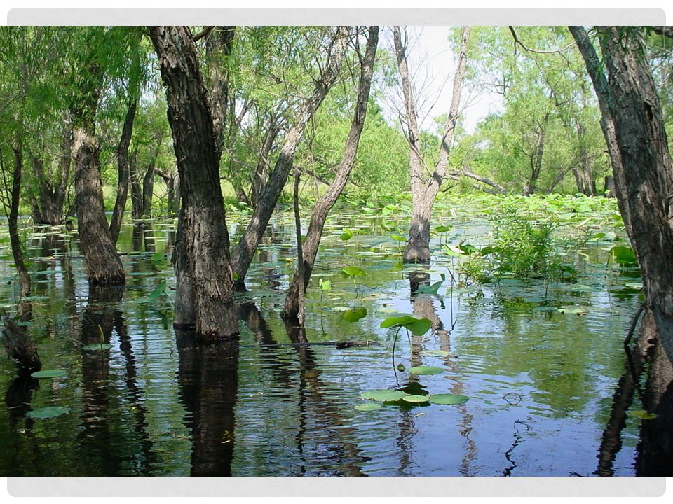 Study the picture of the wetland -