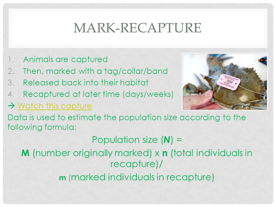 Mark-Recapture Population size (N) =
