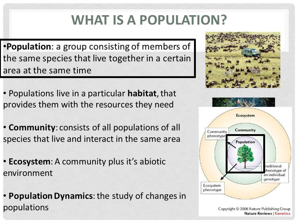 What is a Population Population: a group consisting of members of the same species that live together in a certain area at the same time.