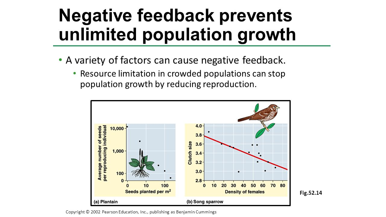 Negative feedback prevents unlimited population growth