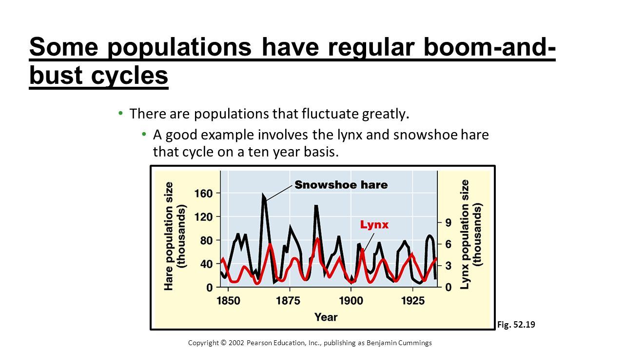 Some populations have regular boom-and-bust cycles