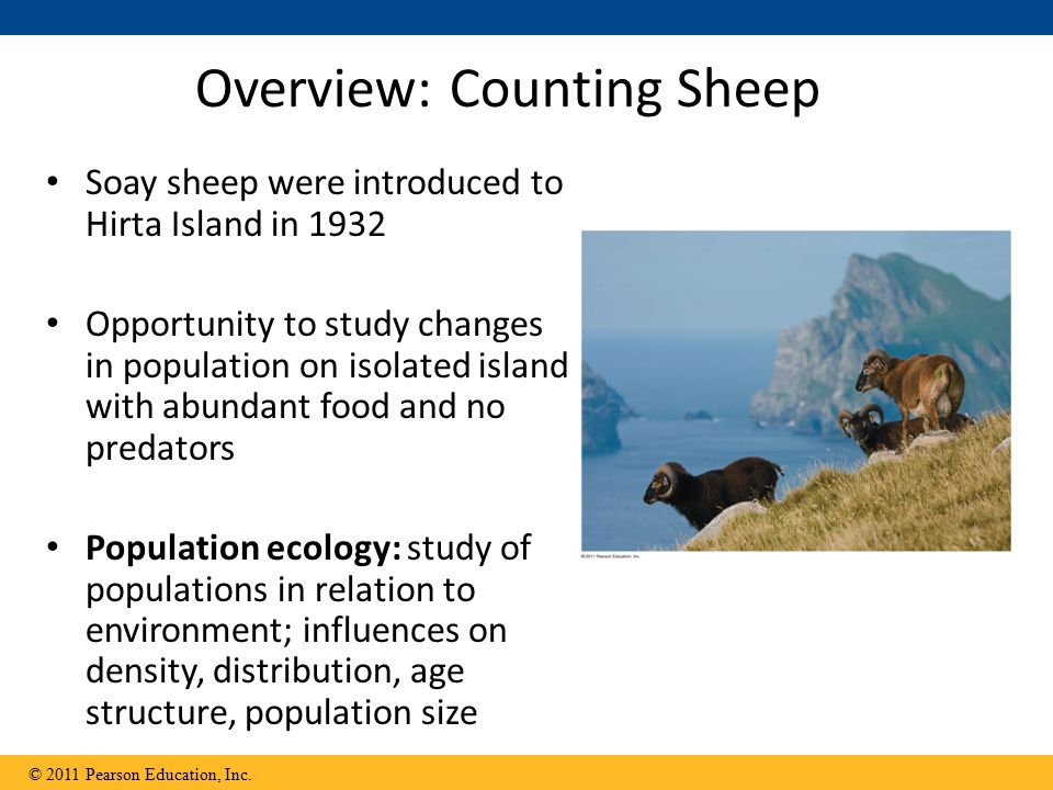 Overview: Counting Sheep