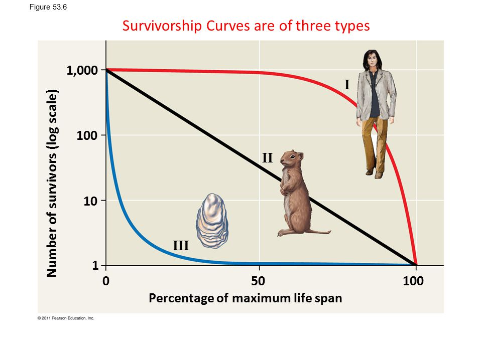 Survivorship Curves are of three types