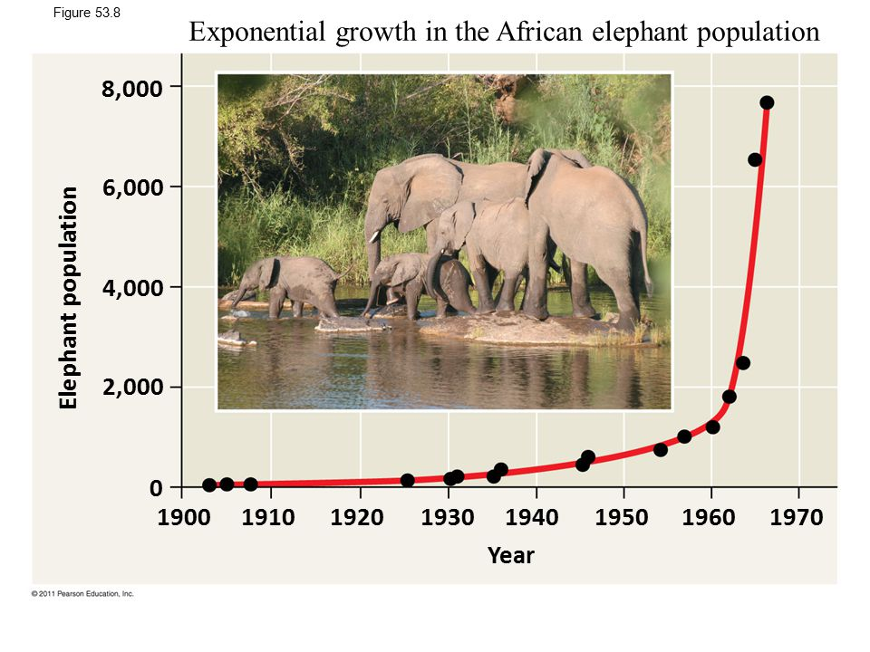 Exponential growth in the African elephant population