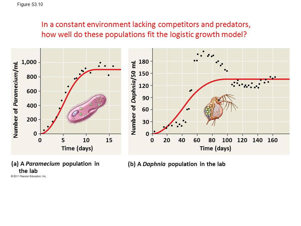 Figure 53.10 In a constant environment lacking competitors and predators, how well do these populations fit the logistic growth model