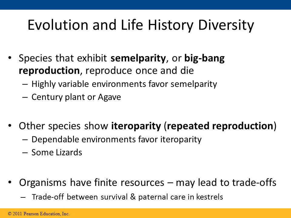 Evolution and Life History Diversity