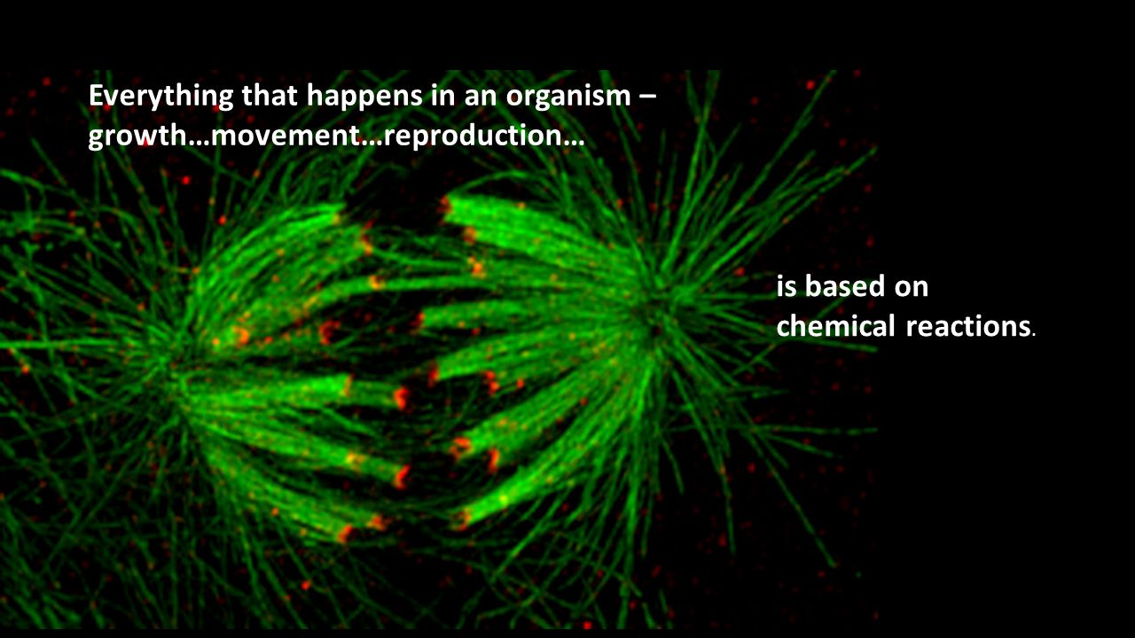 Everything that happens in an organism – growth…movement…reproduction…