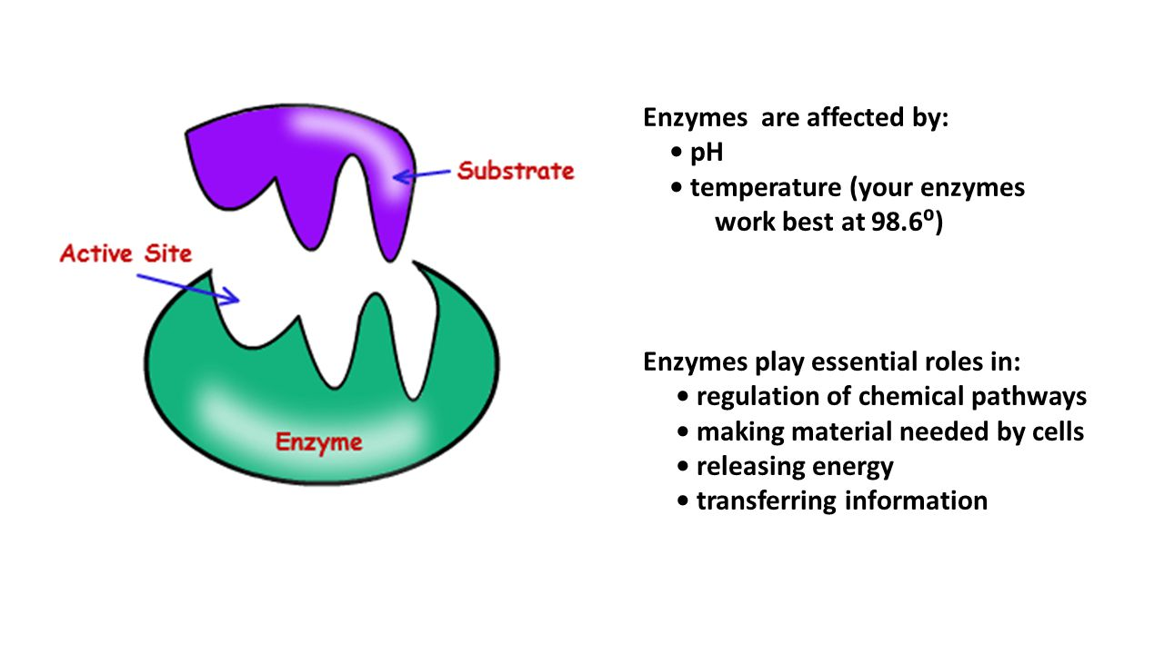 Enzymes are affected by: