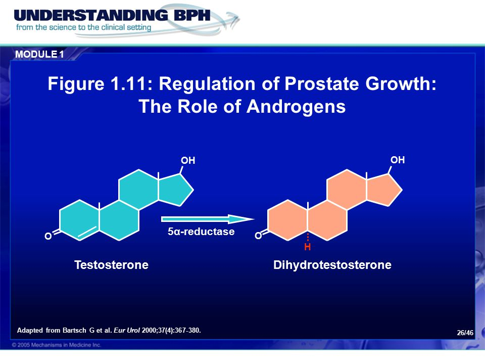 Figure 1.11: Regulation of Prostate Growth: The Role of Androgens