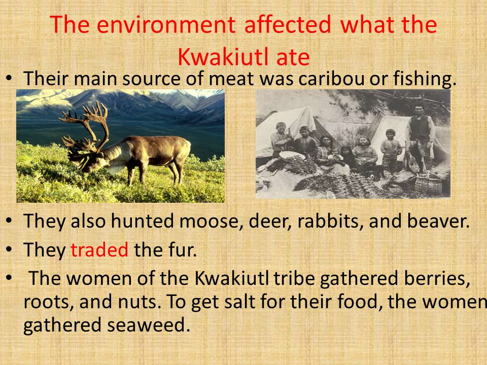 The environment affected what the Kwakiutl ate