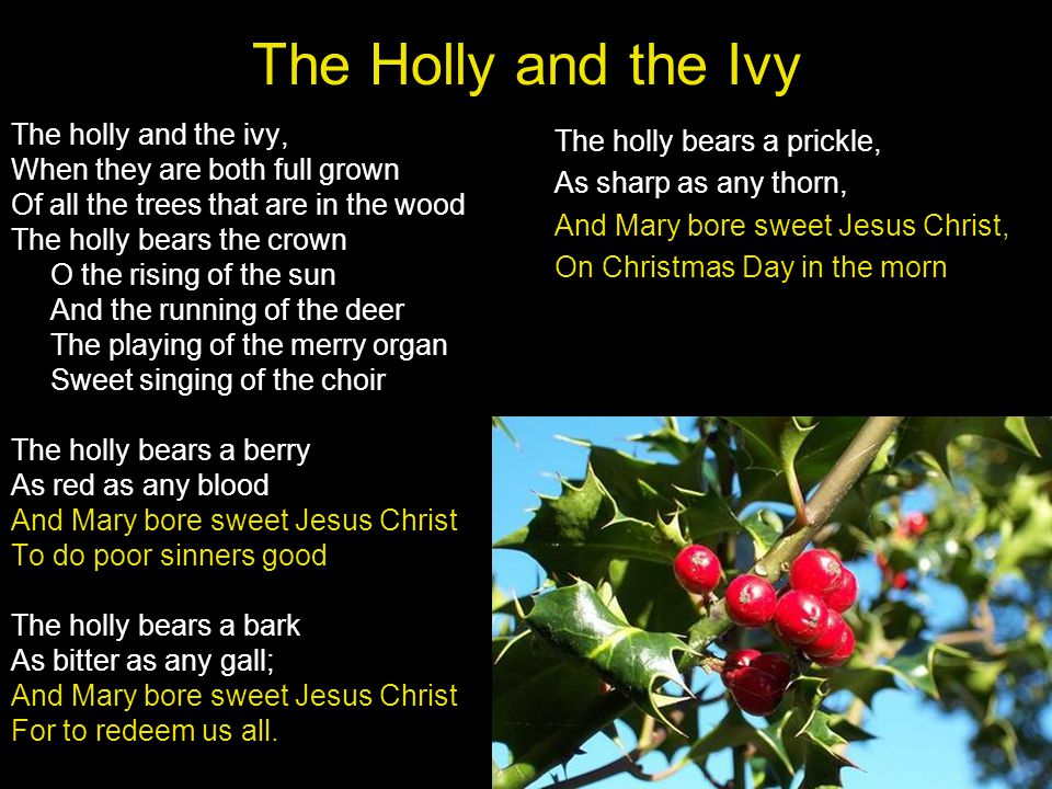 The Holly and the Ivy The holly and the ivy,