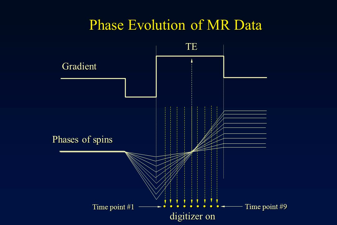 ……… Phase Evolution of MR Data TE Gradient Phases of spins