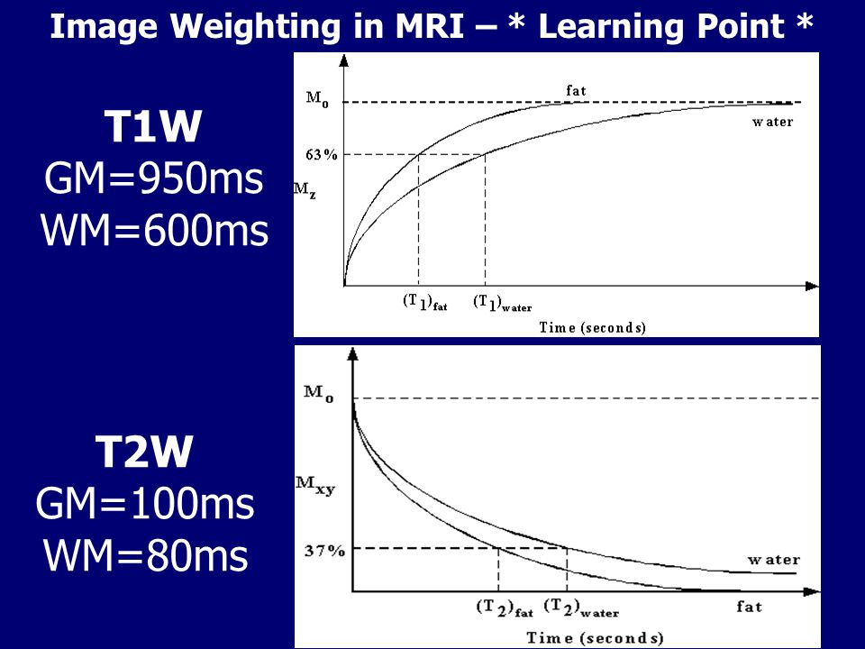 T1W GM=950ms WM=600ms T2W GM=100ms WM=80ms