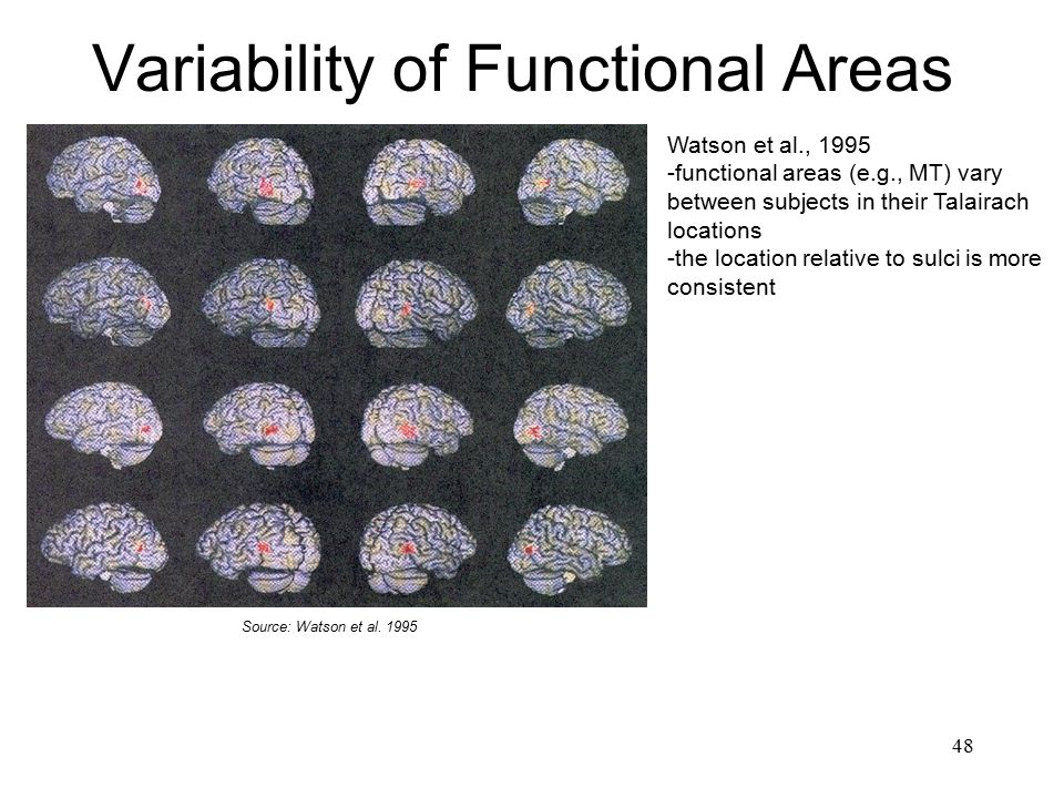 Variability of Functional Areas