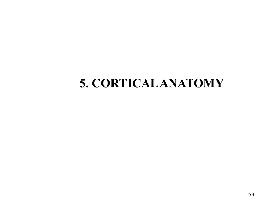 5. CORTICAL ANATOMY