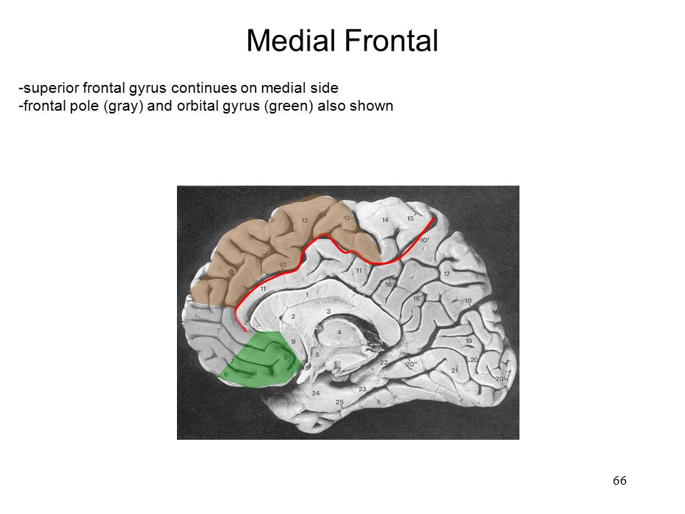 Medial Frontal -superior frontal gyrus continues on medial side