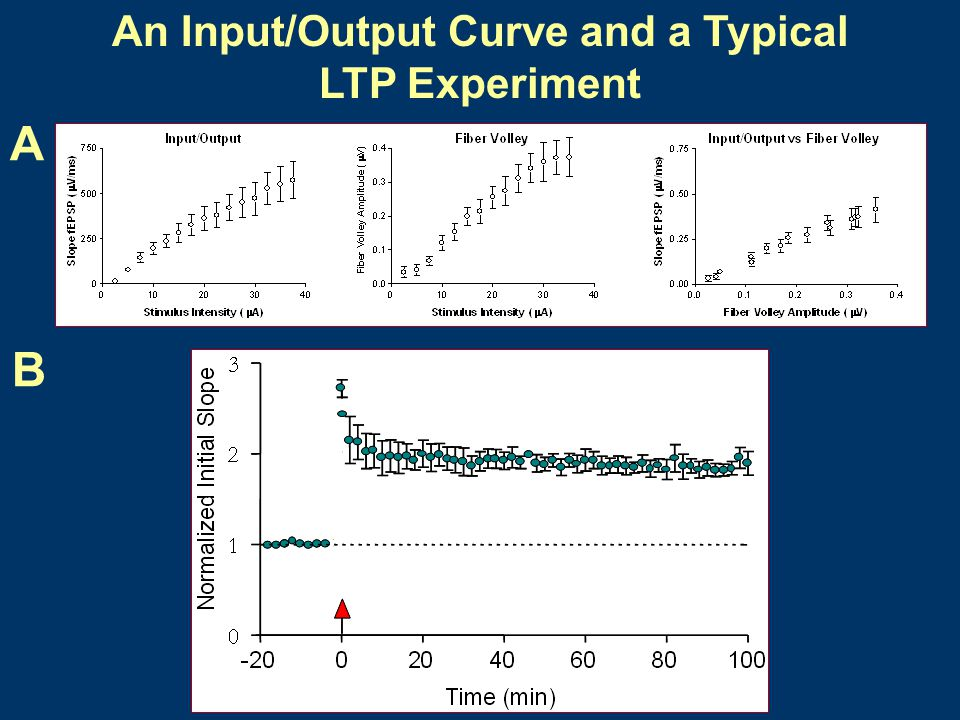 An Input/Output Curve and a Typical LTP Experiment