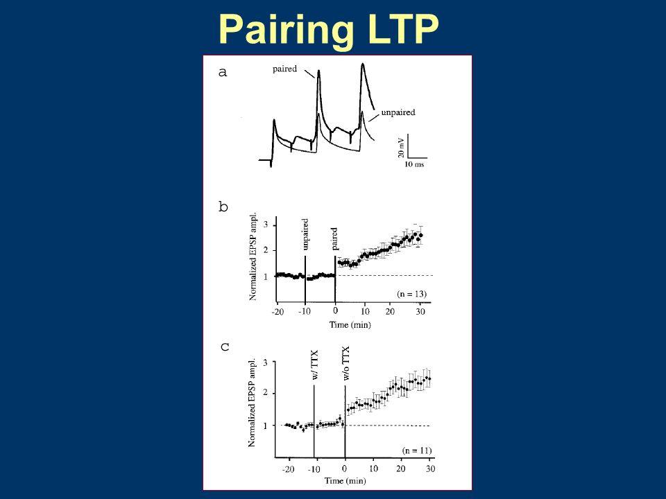 Pairing LTP