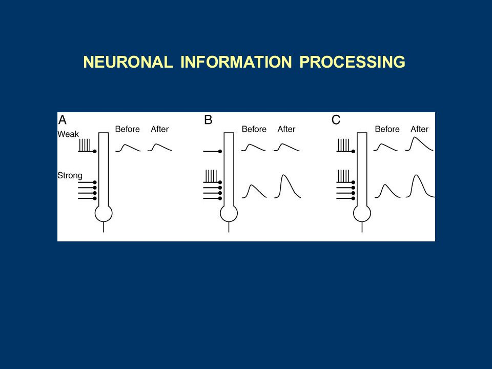 NEURONAL INFORMATION PROCESSING