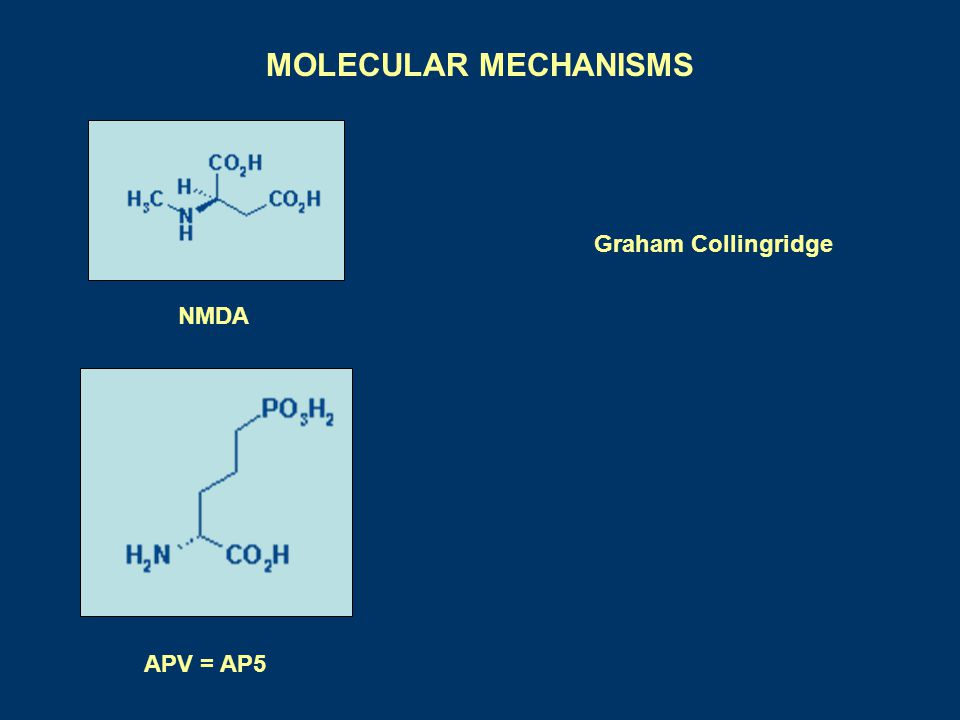 MOLECULAR MECHANISMS NMDA Graham Collingridge APV = AP5