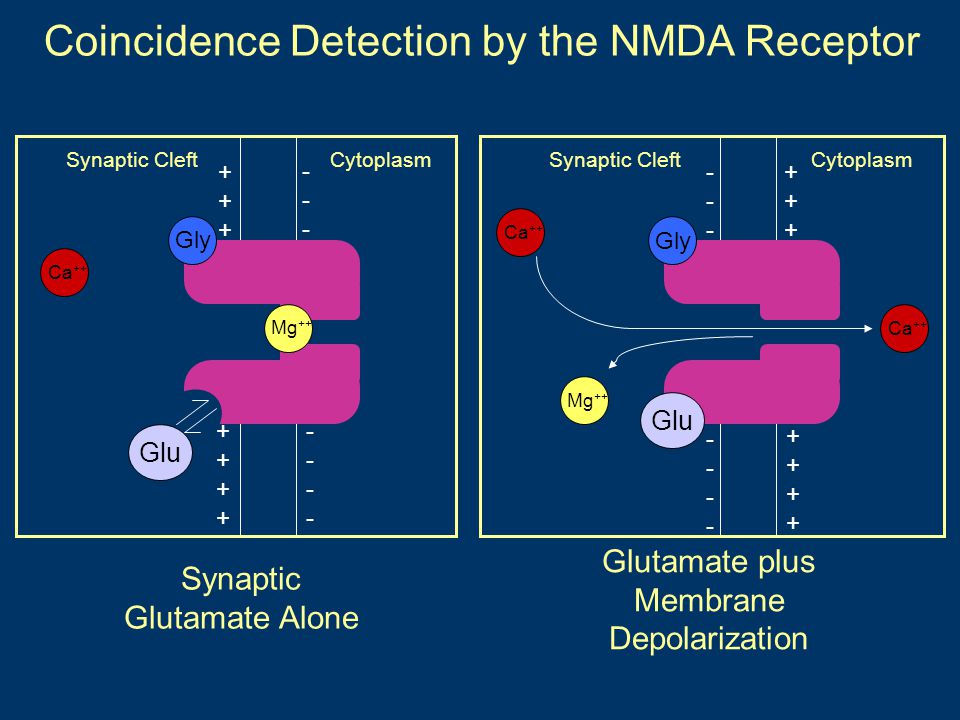 Coincidence Detection by the NMDA Receptor
