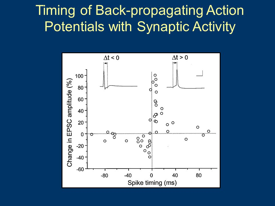 Timing of Back-propagating Action Potentials with Synaptic Activity