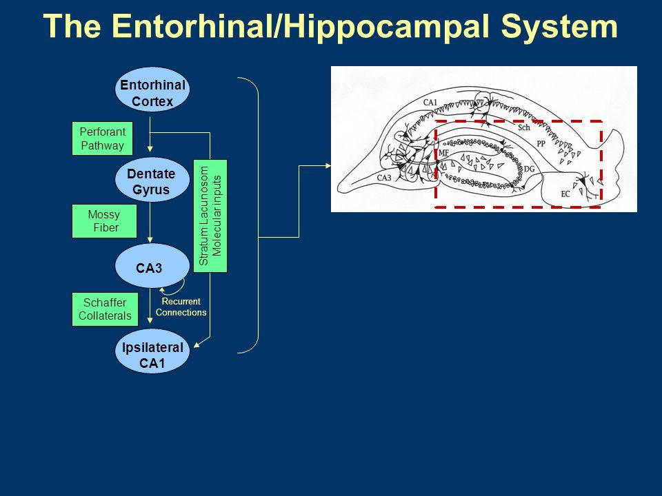The Entorhinal/Hippocampal System