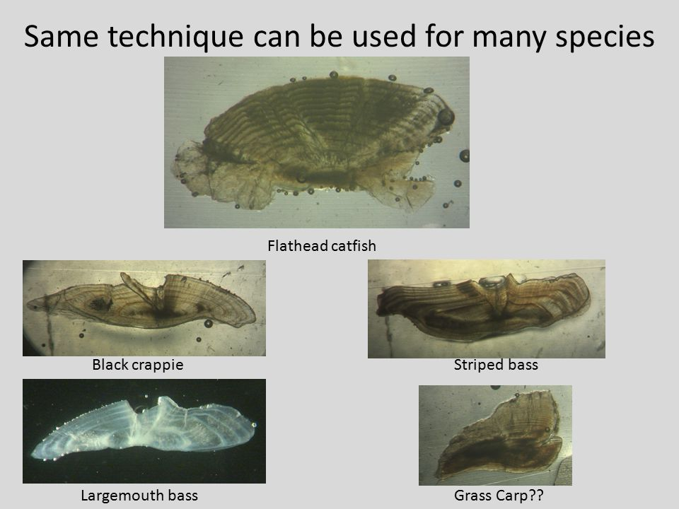 Same technique can be used for many species
