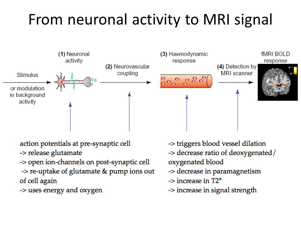 From neuronal activity to MRI signal