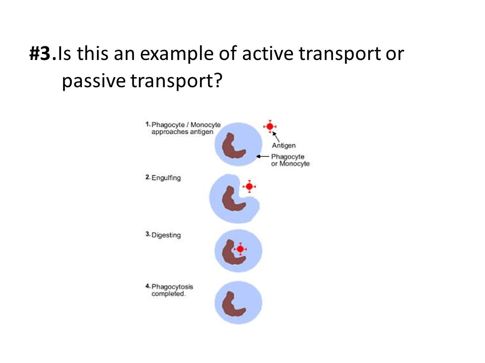 #3.Is this an example of active transport or passive transport