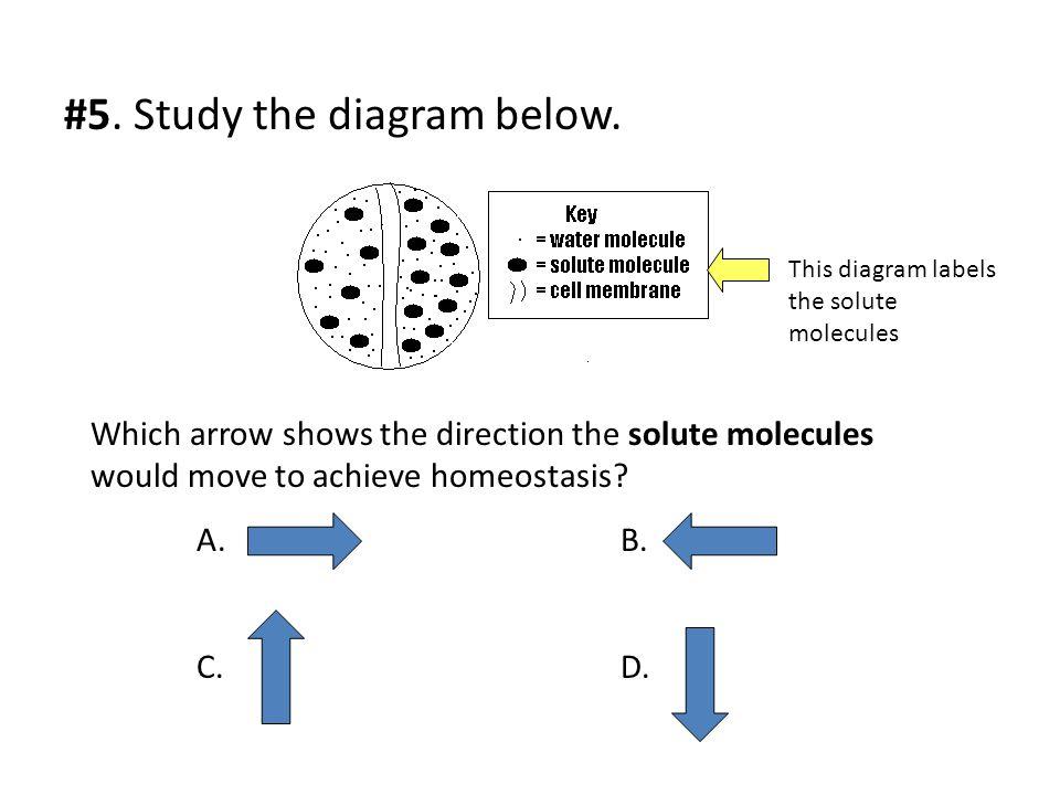 #5. Study the diagram below.