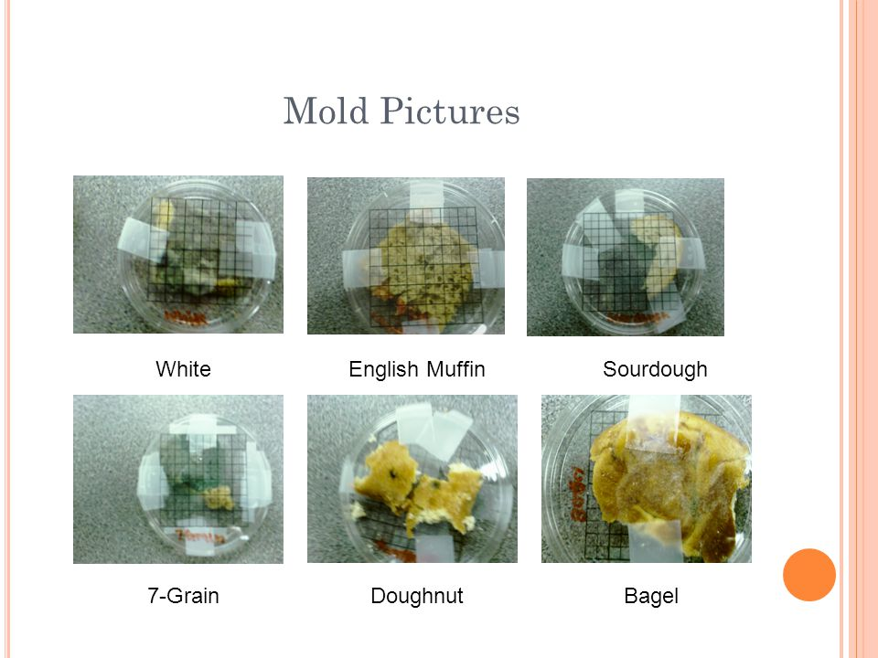 Mold Pictures White English Muffin Sourdough 7-Grain Doughnut Bagel