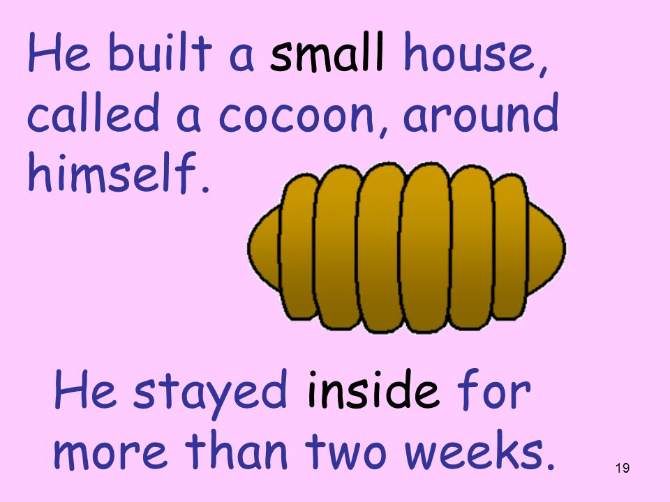 He built a small house, called a cocoon, around himself.