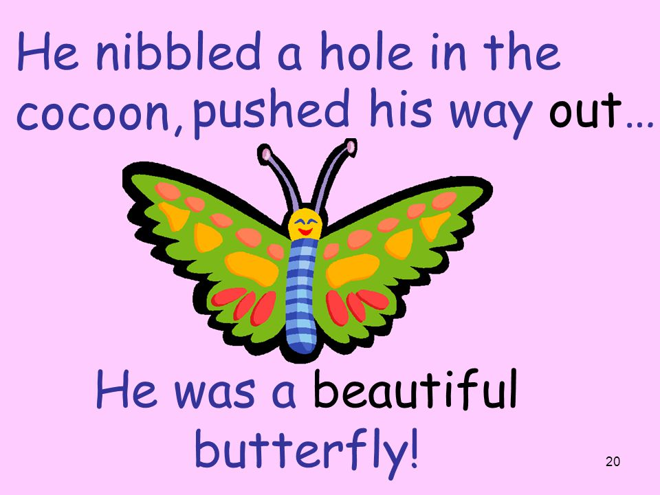 He was a beautiful butterfly!
