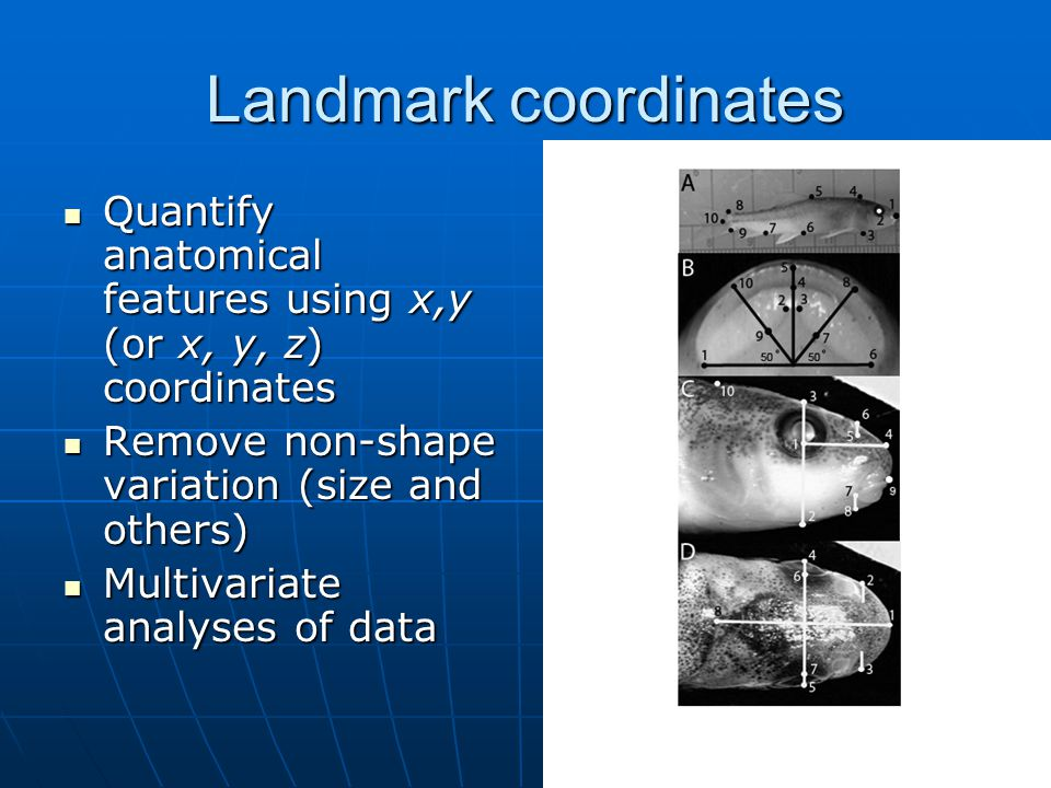 Landmark coordinates Quantify anatomical features using x,y (or x, y, z) coordinates. Remove non-shape variation (size and others)