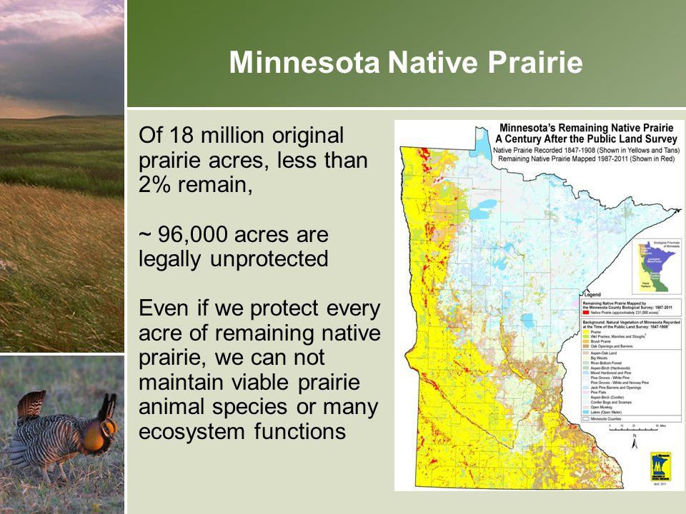 Minnesota Native Prairie