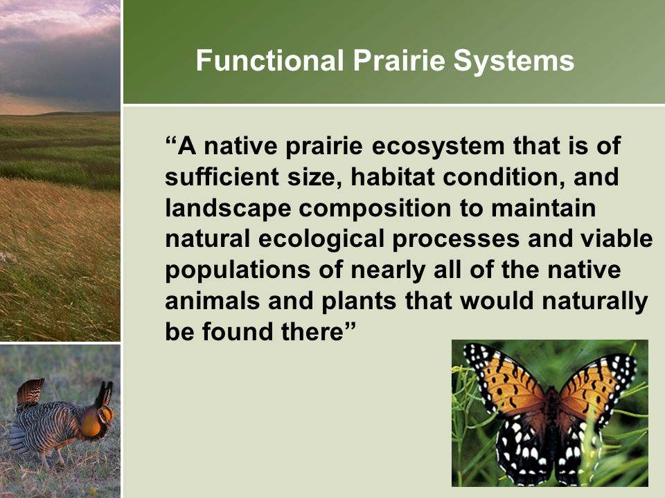 Functional Prairie Systems