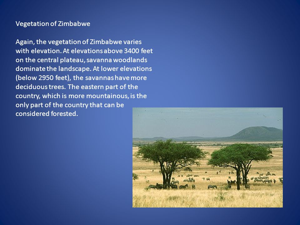 Vegetation of Zimbabwe
