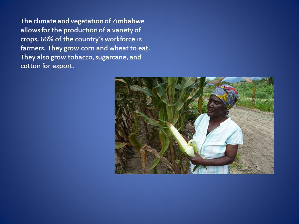 The climate and vegetation of Zimbabwe allows for the production of a variety of crops.
