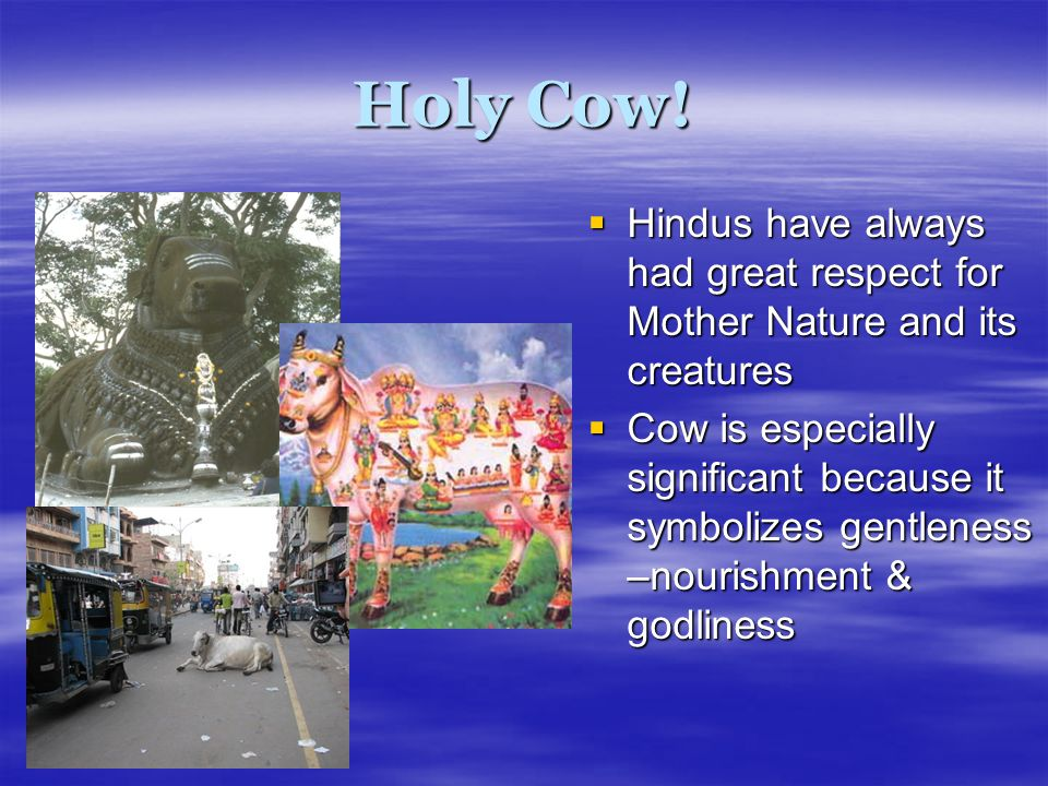 Holy Cow! Hindus have always had great respect for Mother Nature and its creatures.
